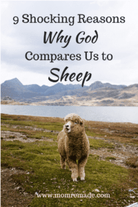 9 Shocking Reasons Why God Compares Us to Sheep