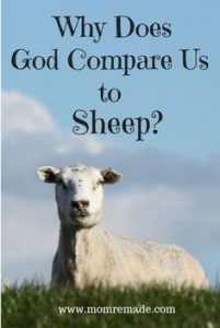 God Compares Us to Sheep. A sheep out in the pasture staring.